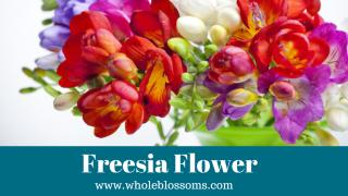 freesia flowers.pdf